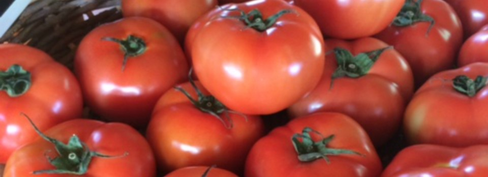 Tomato picture website