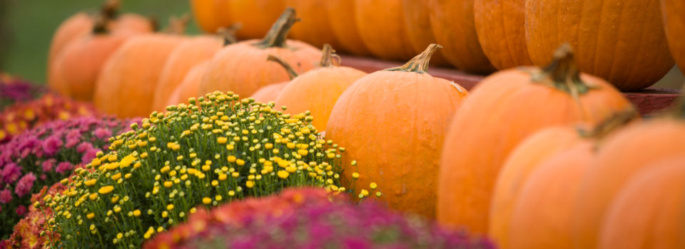 Wagner__Matthew_J_Wagner_Fine_Photography_MJW12100310073375PumpkinEventCO